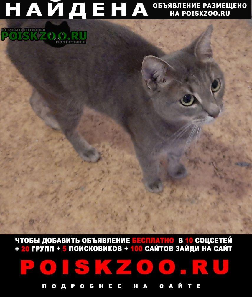 Москва Найдена кошка южное бутово изюмская