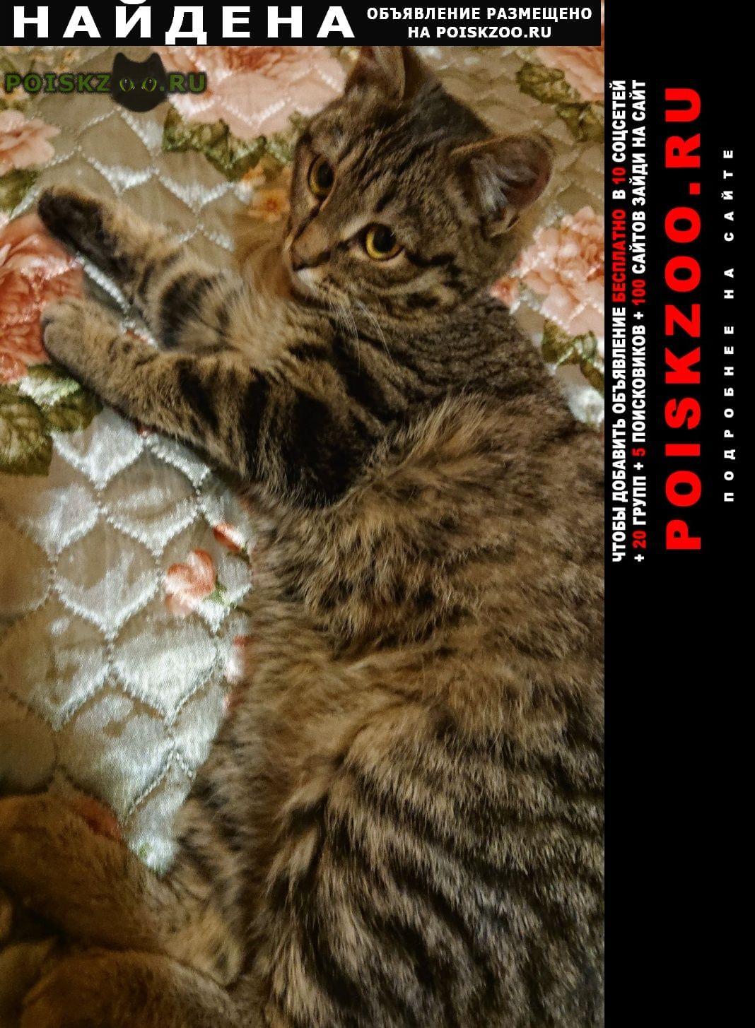 Найдена кошка котенок около станция тарасовская г.Черкизово
