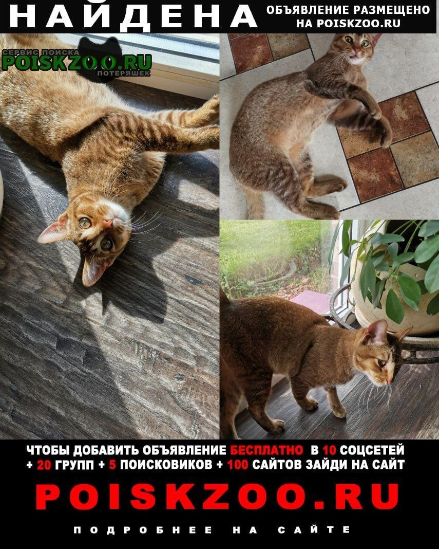 Найден кот ский р-н, д. жальское. г.Чехов