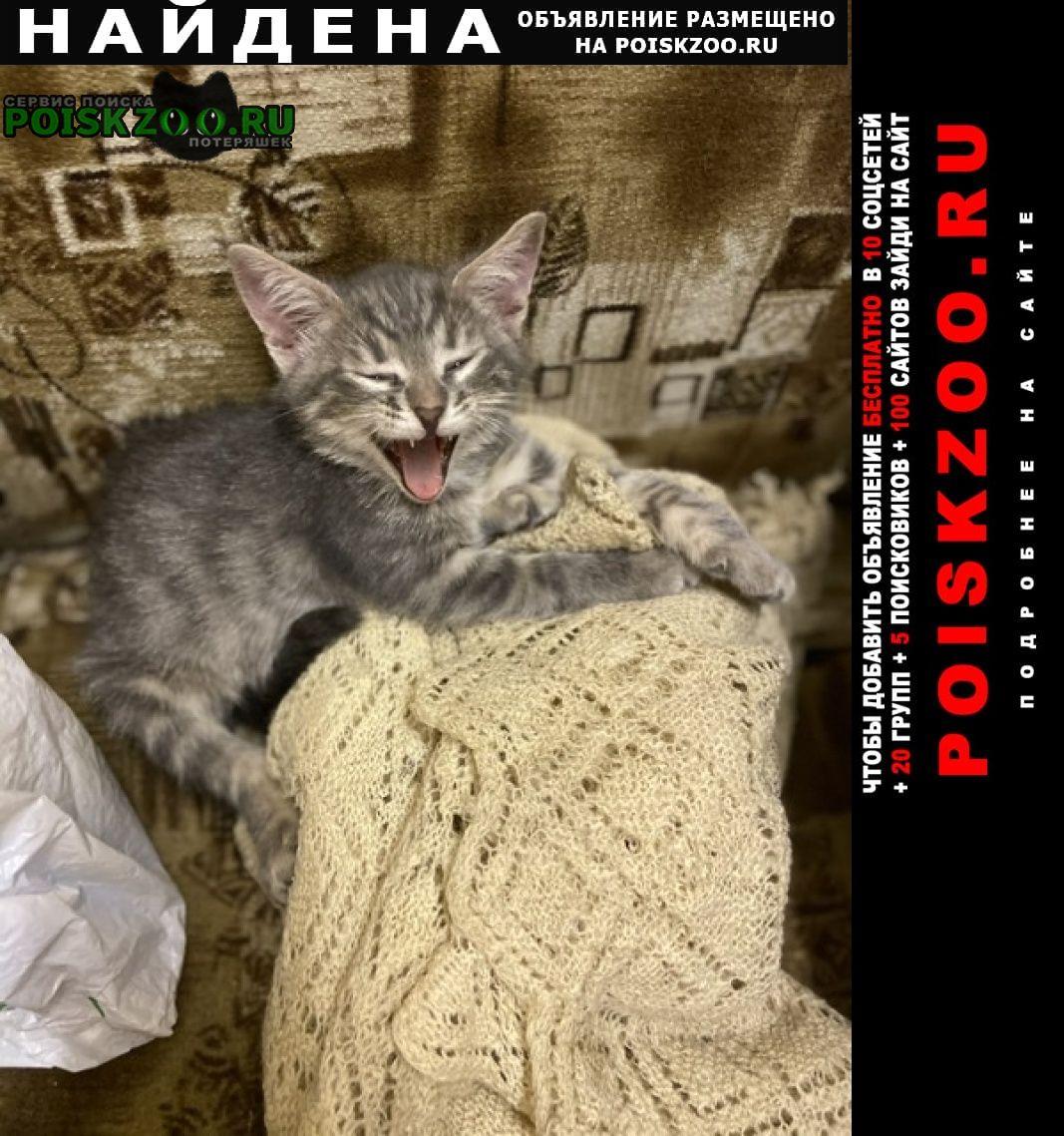Найдена кошка Зеленоград
