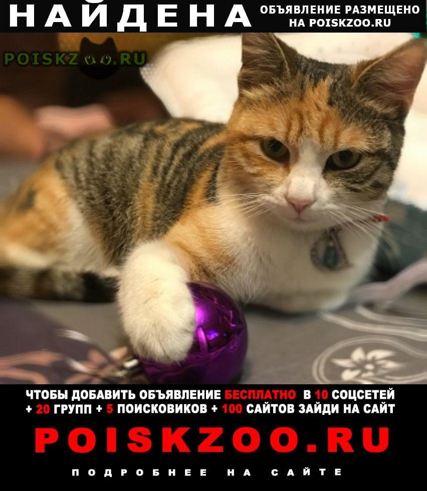Найдена кошка Севастополь
