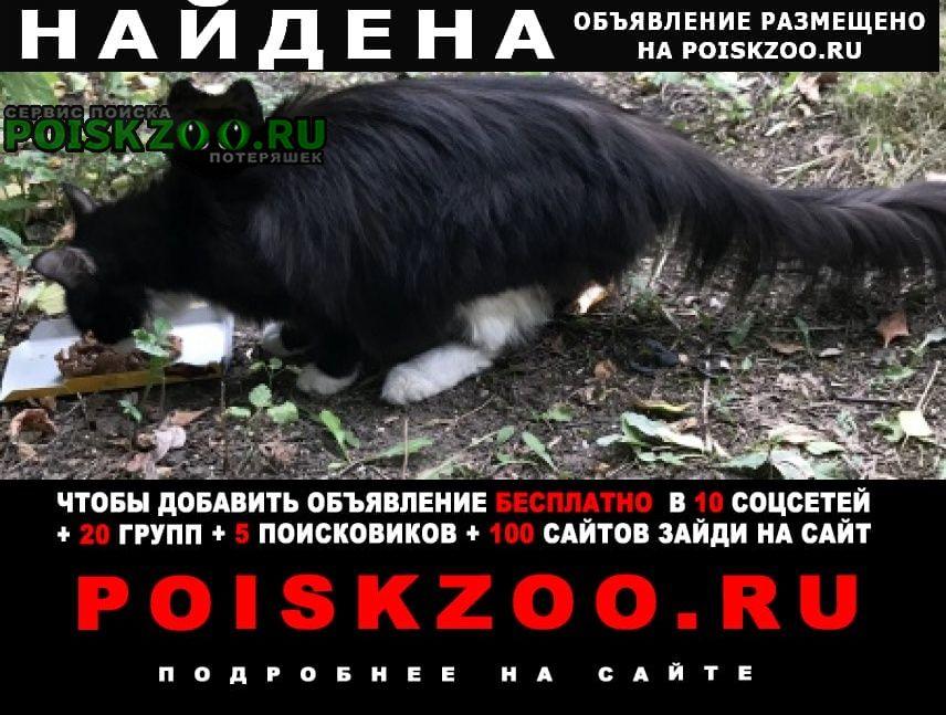 Найдена кошка чёрная с белой грудкой и белыми лапами Москва