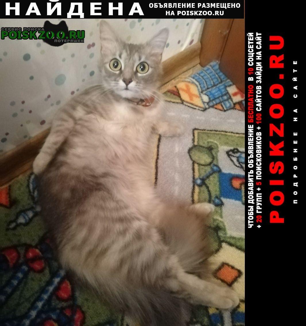 Найдена кошка девочка, алтуфьевское шоссе 13 Москва