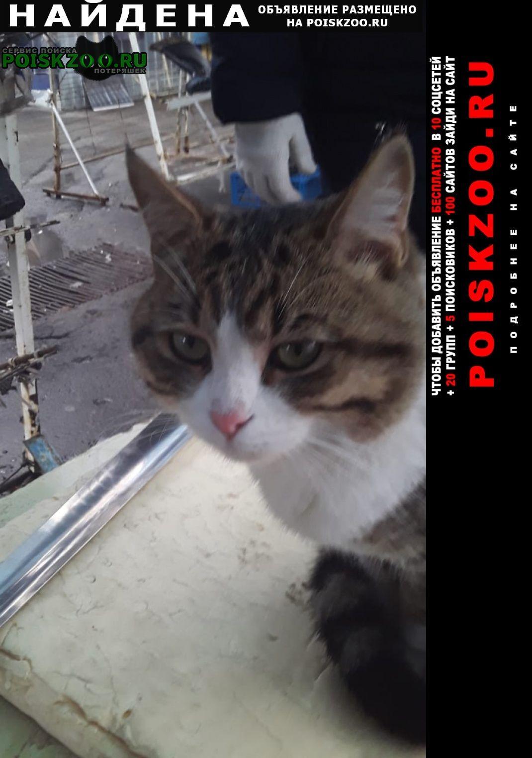 Найден кот Казань