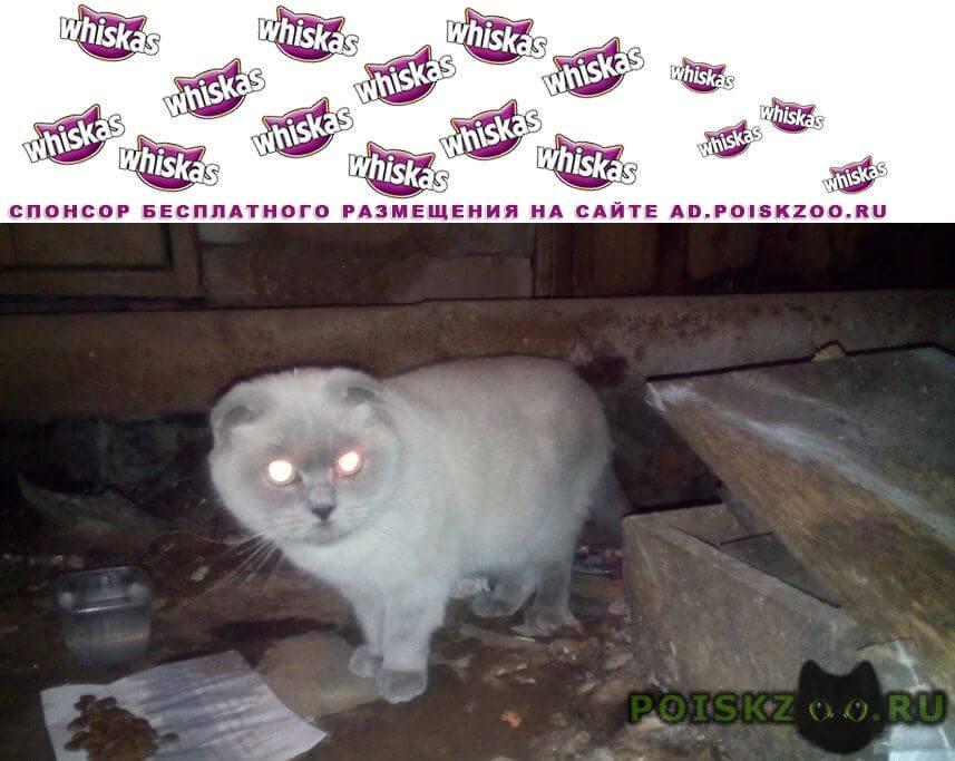 Найдена кошка, р-н динамо г.Тамбов