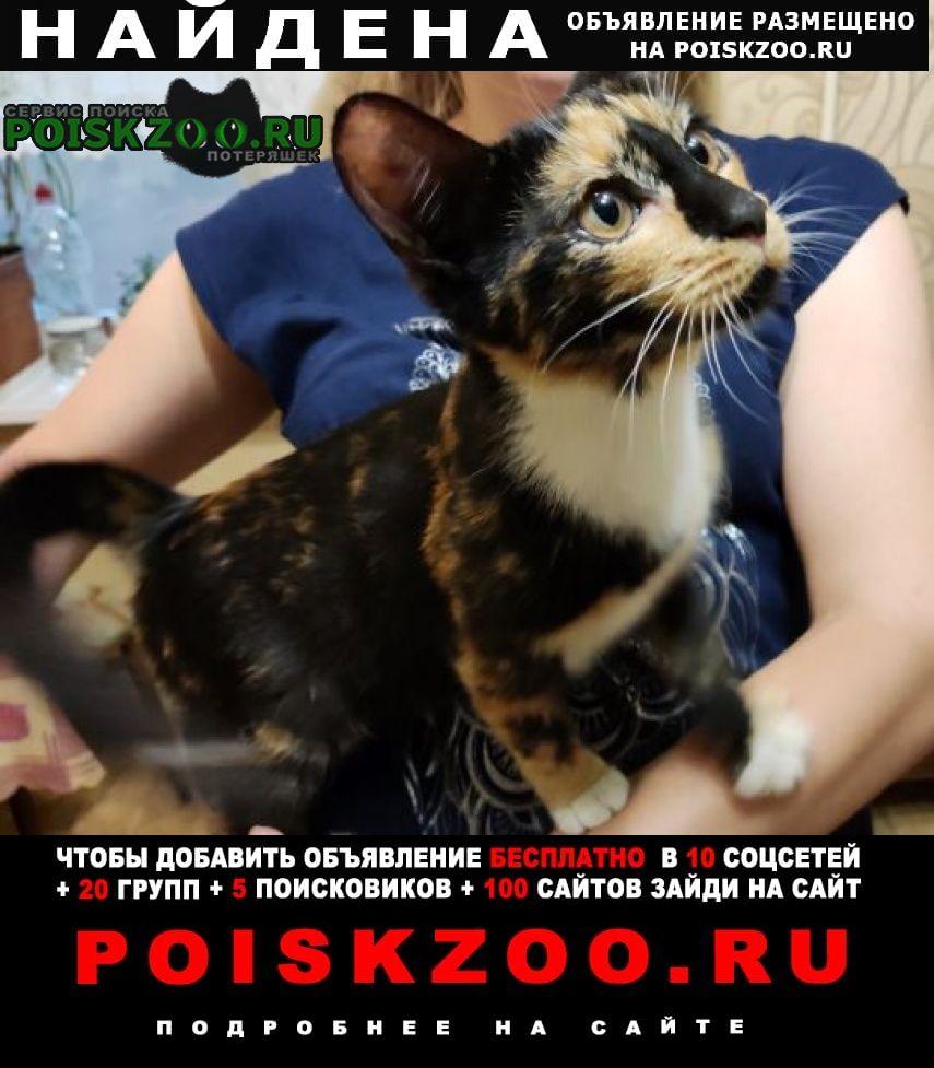 Москва Найдена кошка кот. отрадноe