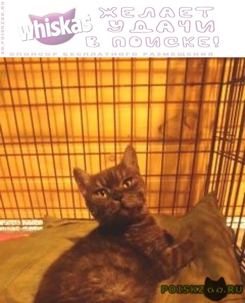 Найдена кошка кошечка г.Тюмень