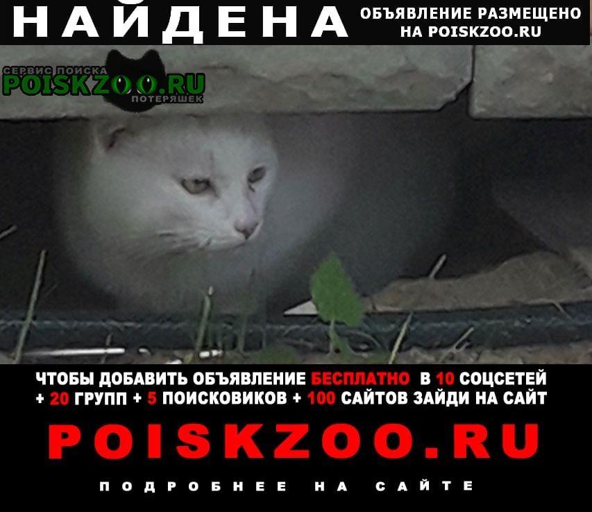Найдена кошка кот чисто белого цвета Москва