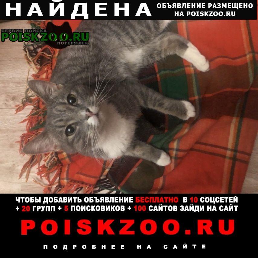 Найдена кошка домашний ласковый кот Москва