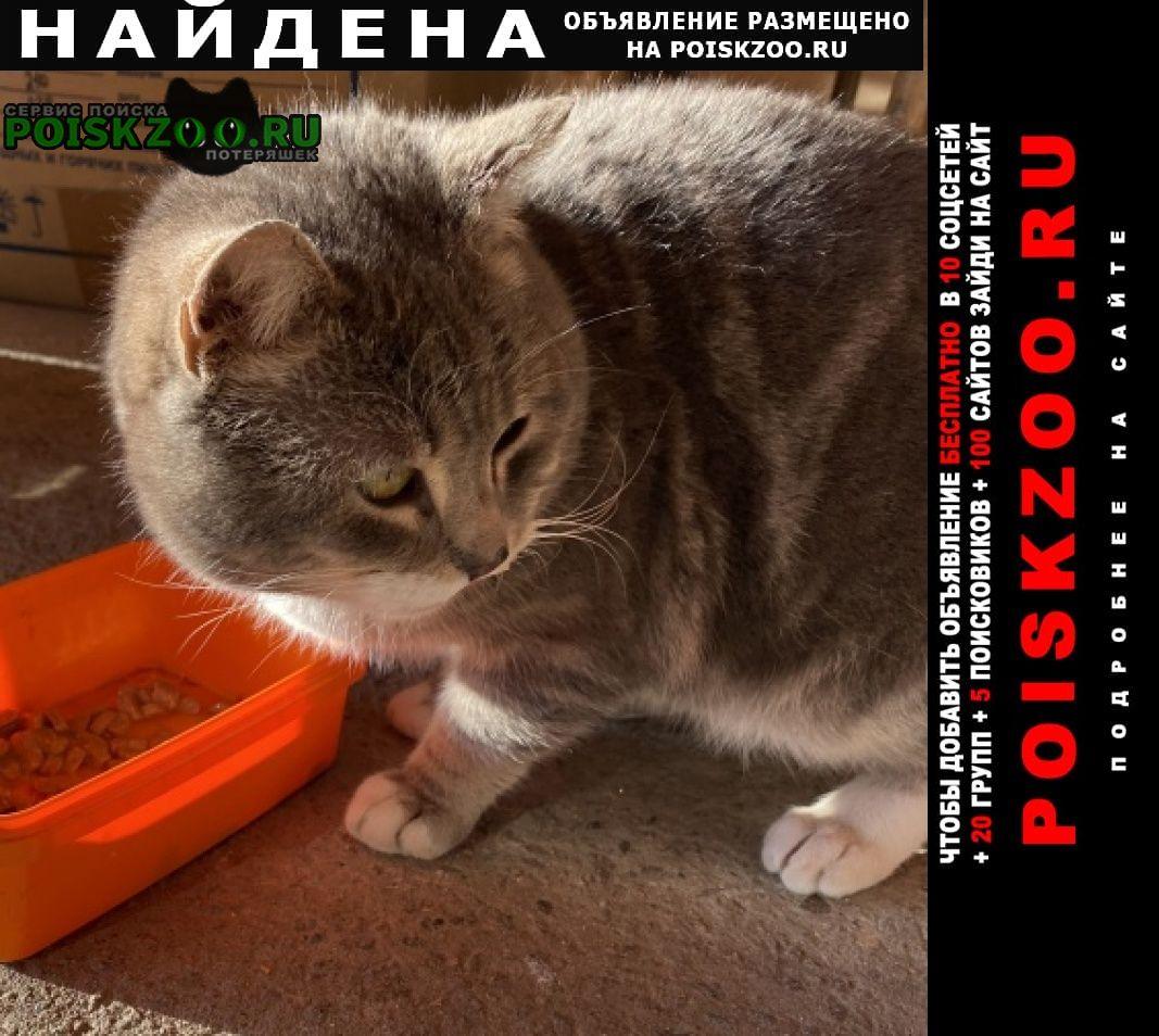 Найдена кошка мо ленинский район, д слобода, дроздово Москва