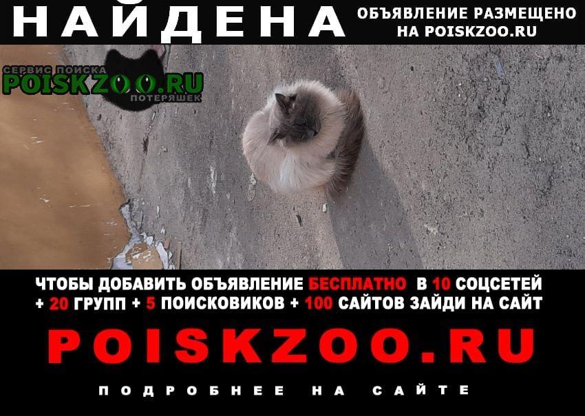 Найдена кошка район измайлово невская маскарадная Москва