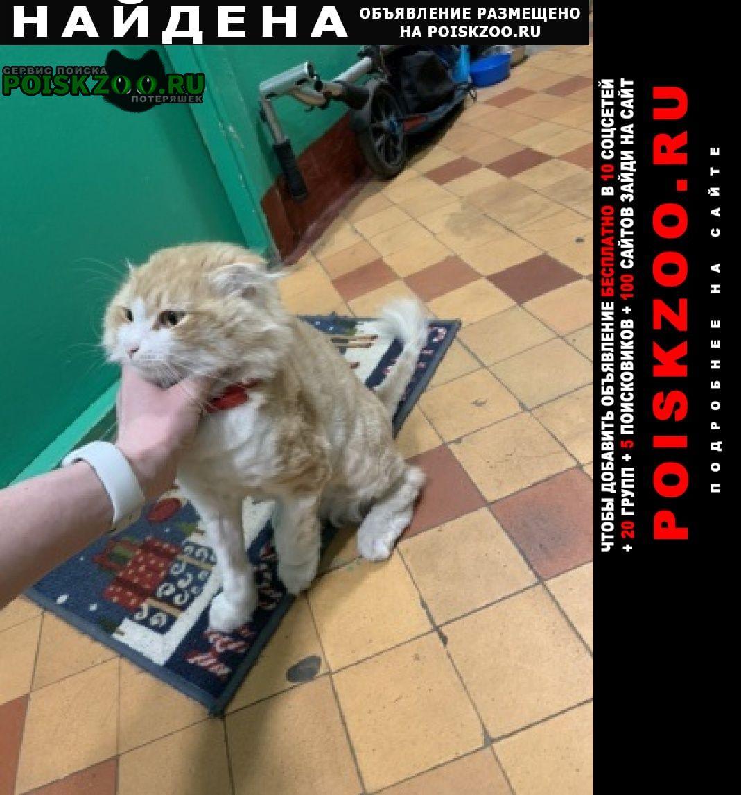 Найден кот вислоухий ювао рыжий Москва