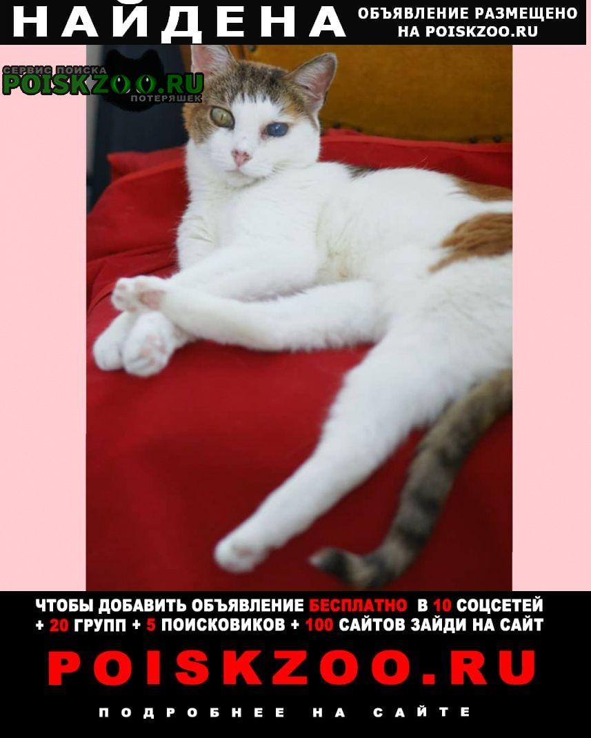 Найдена кошка трехцветная Москва