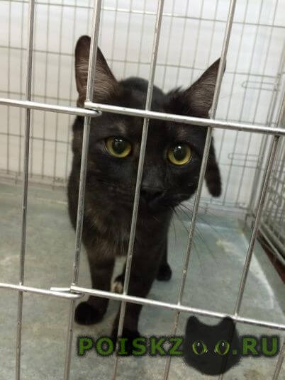 Найден кот молодой в районе ховрино г.Москва