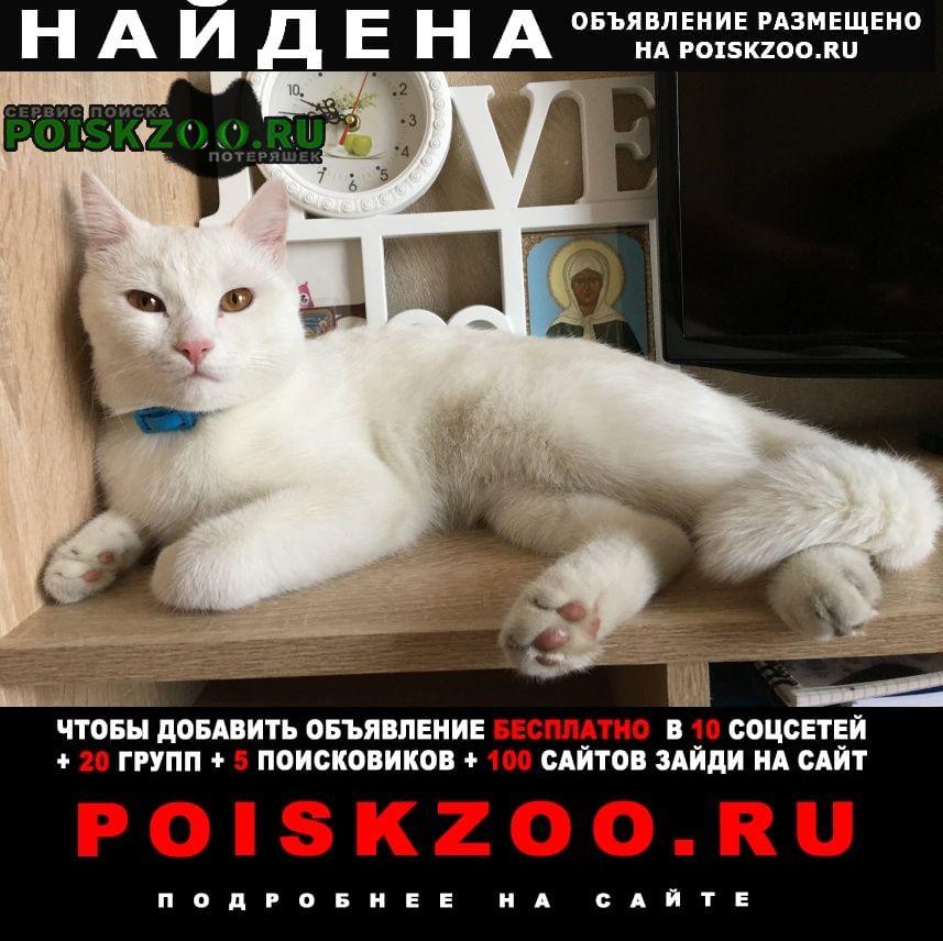 Найдена кошка белый котик Челябинск