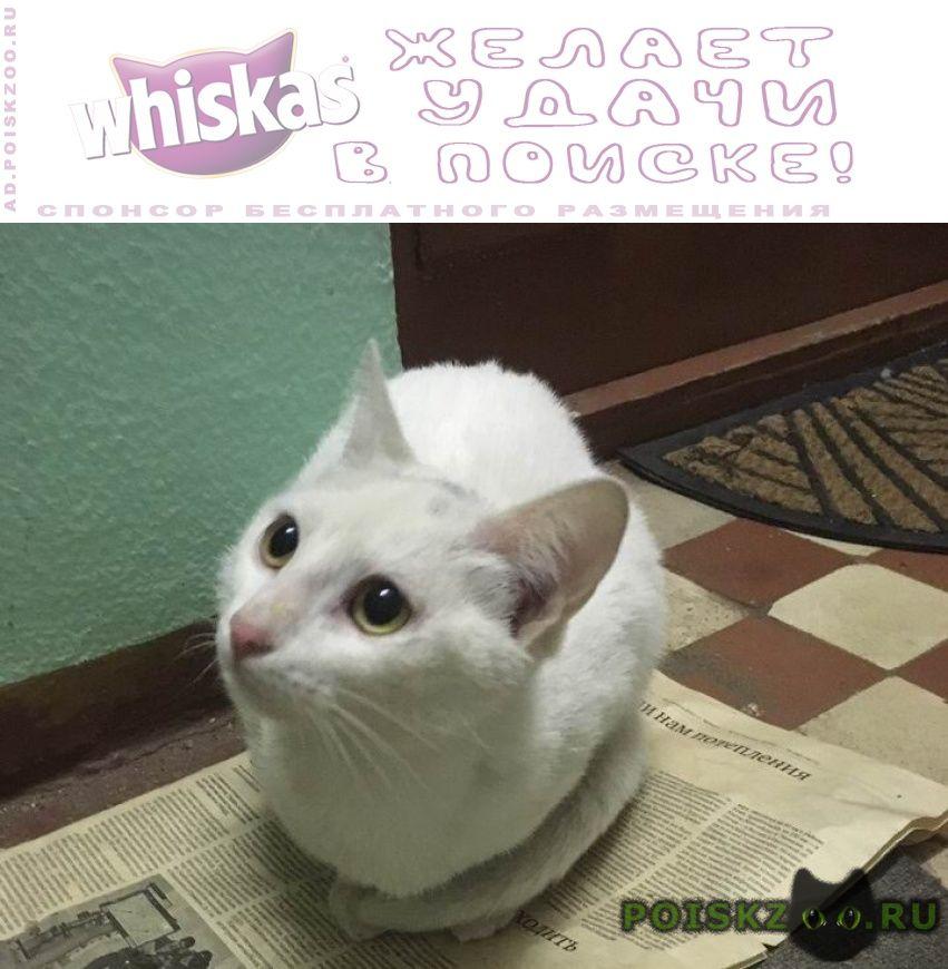 Найдена кошка белая  ул.палехская г.Москва