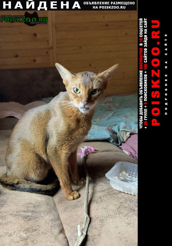 Найден кот абиссинския кошка Заокский