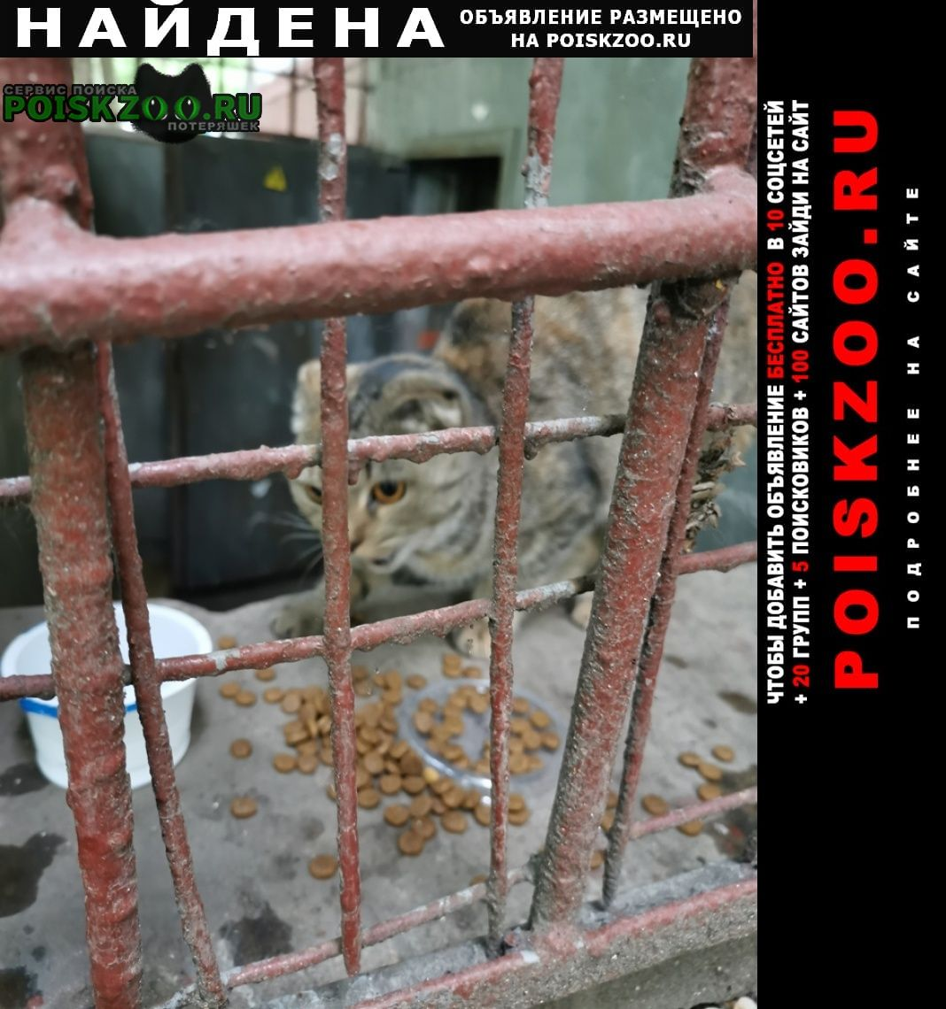 Найдена кошка вислоухая с коротким хвостом Москва