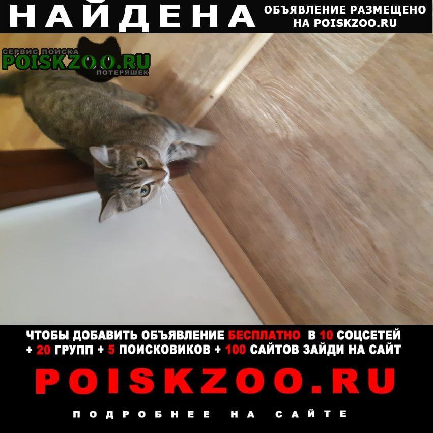 Найдена кошка, заберите пожалуйста Красноярск