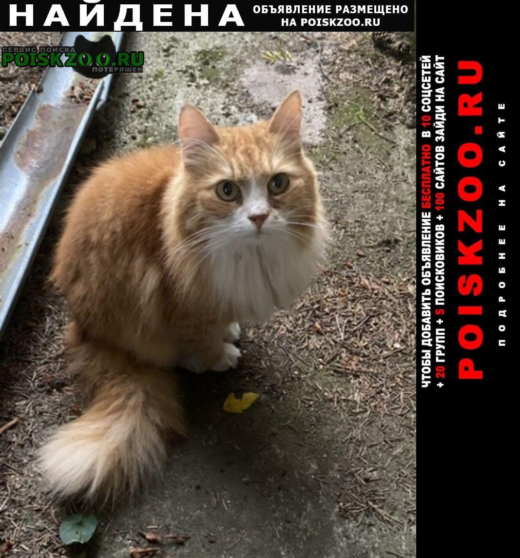 Найдена кошка снт вишневское Зеленогорск (Ленинградская обл.)