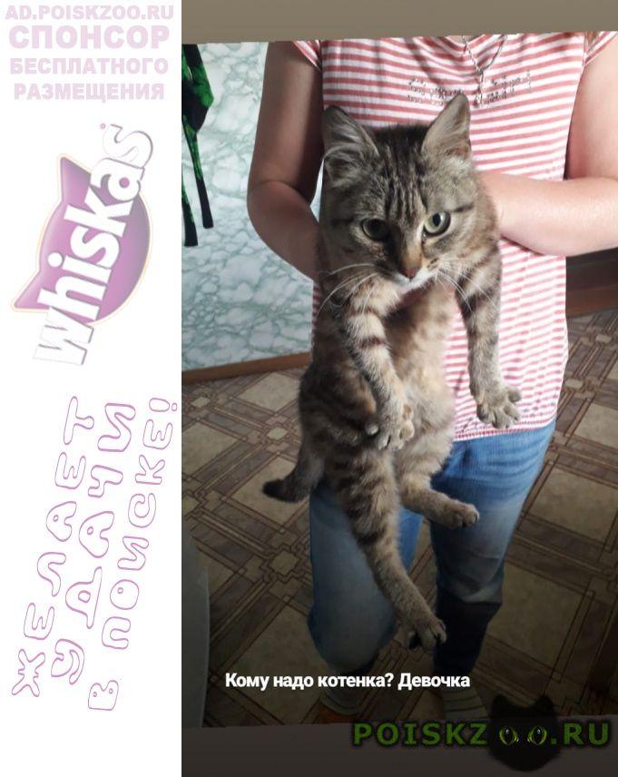 Найдена кошка г.Первоуральск