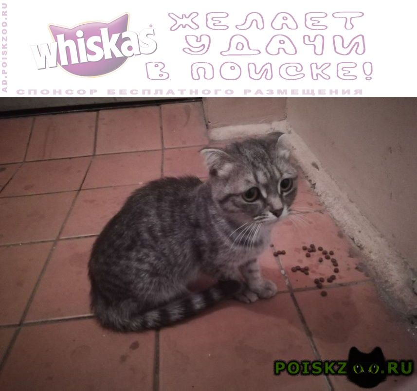 Найдена кошка г.Оренбург