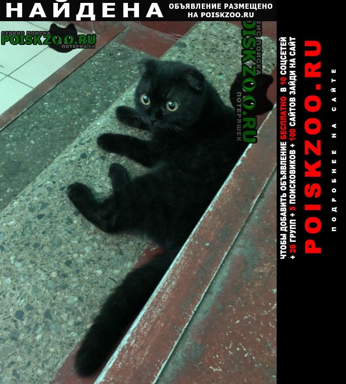 Найдена кошка вислоухая Москва
