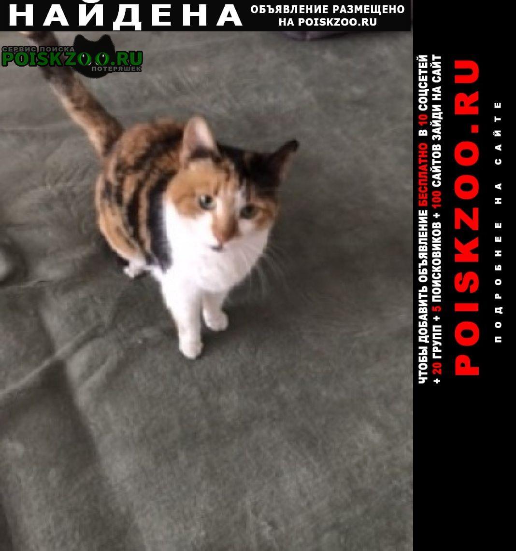 Найдена кошка трёхцветная Москва