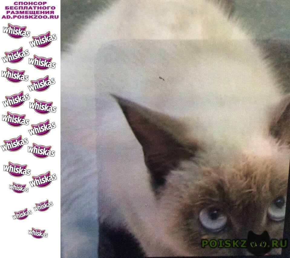 Найдена кошка тайская блю поинт г.Сочи