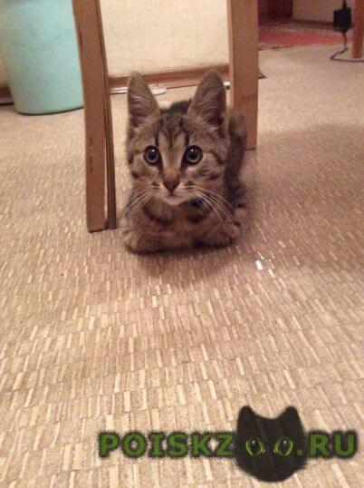Найден котёнок в районе метро молодежная г.Москва