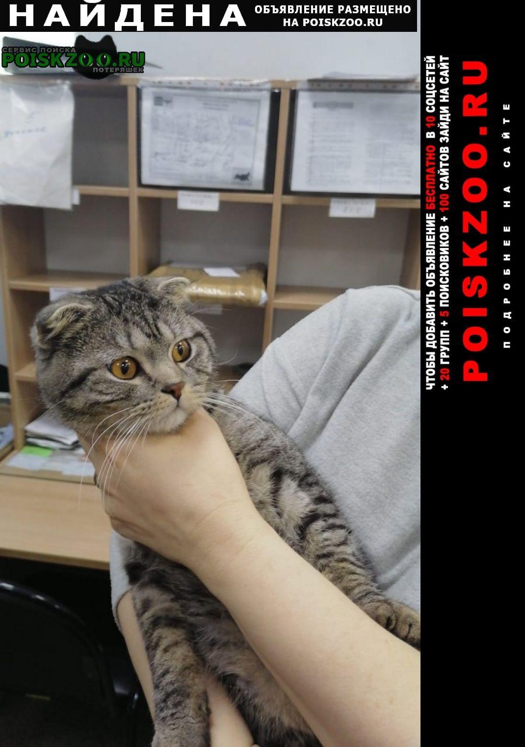 Найден кот молодой ик Москва