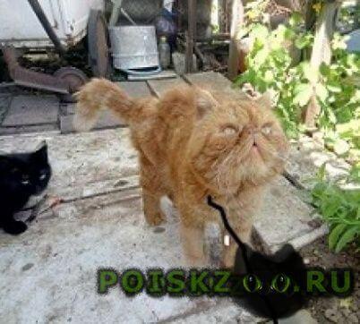 Найден кот пришол на дачу г.Волгодонск