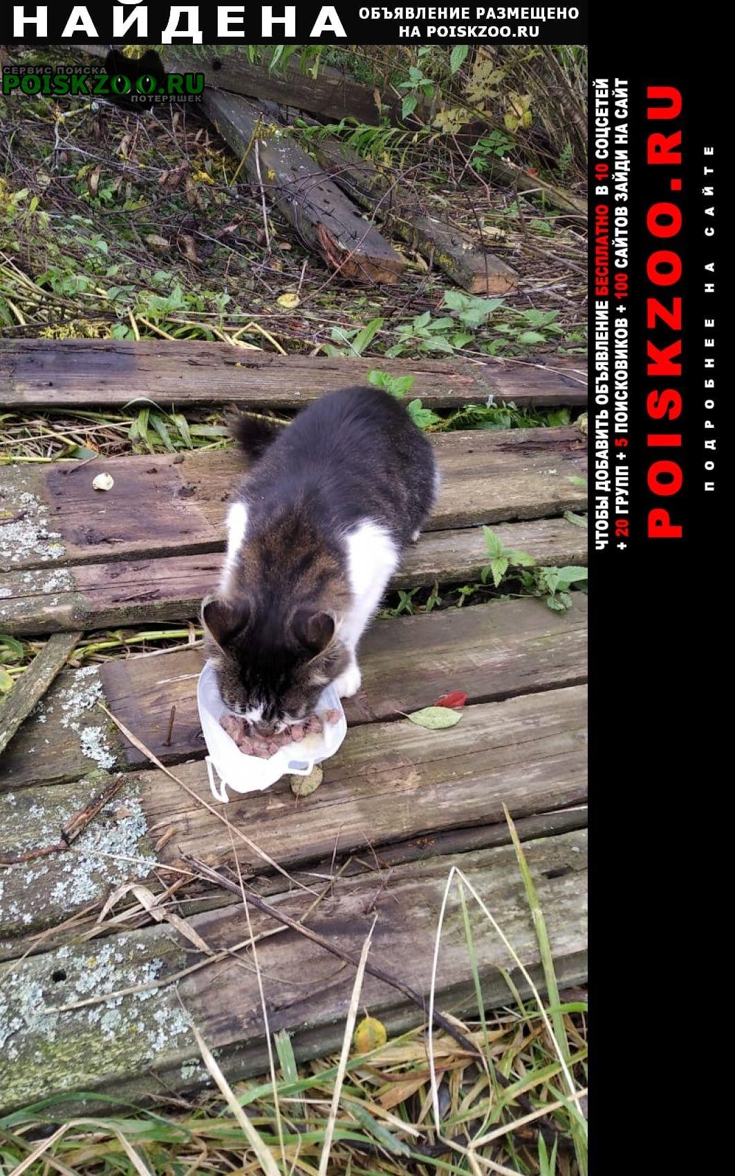 Найдена кошка Дмитров