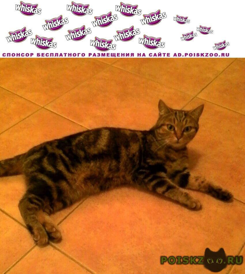 Найдена кошка в востряково г.Домодедово