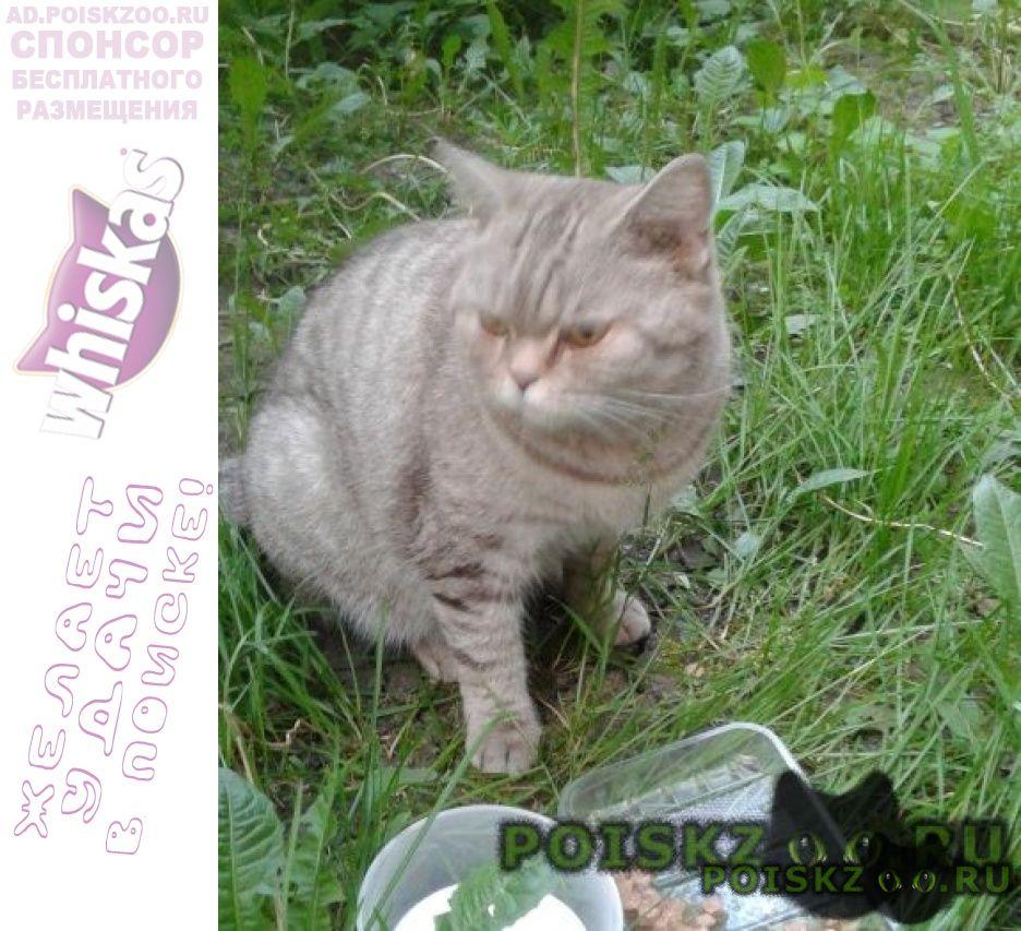 Найдена кошка г.Новокузнецк