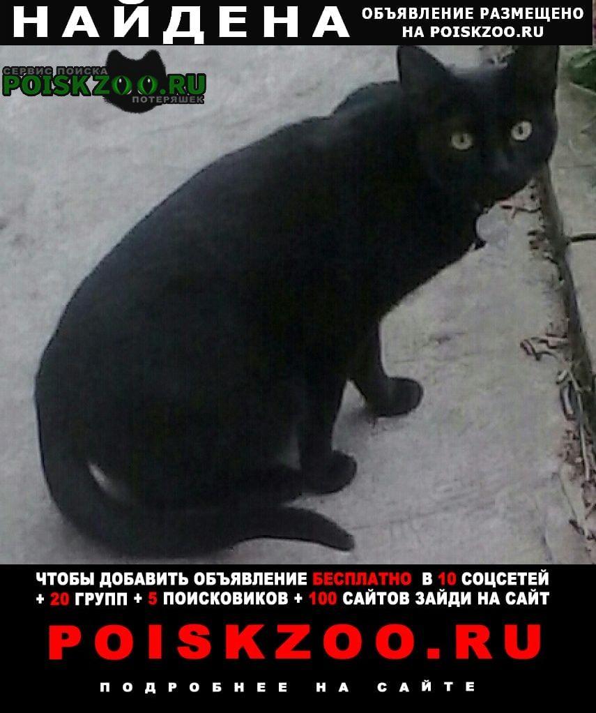 Найдена кошка недалеко от остановки деповская Брянск