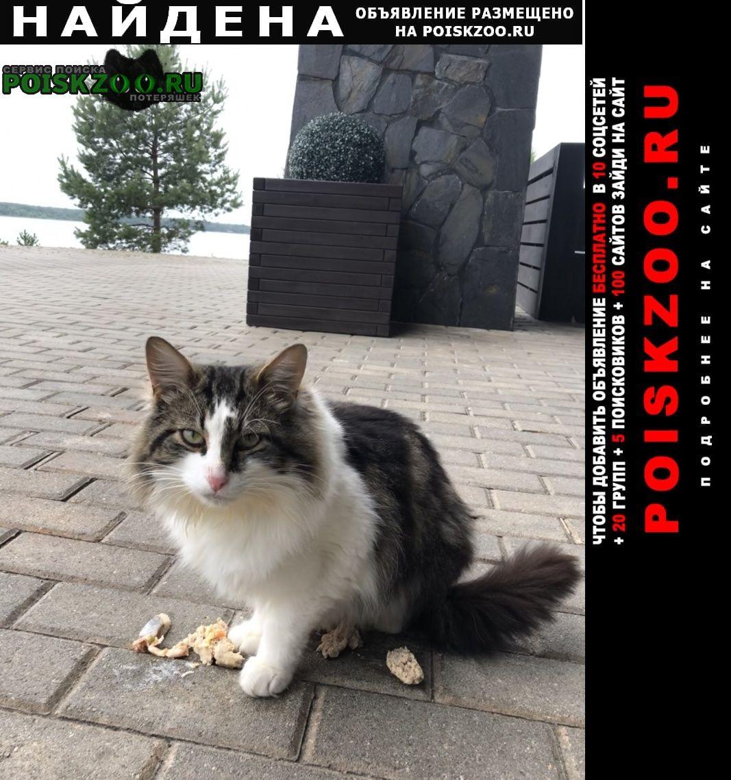 Найдена кошка Тверь