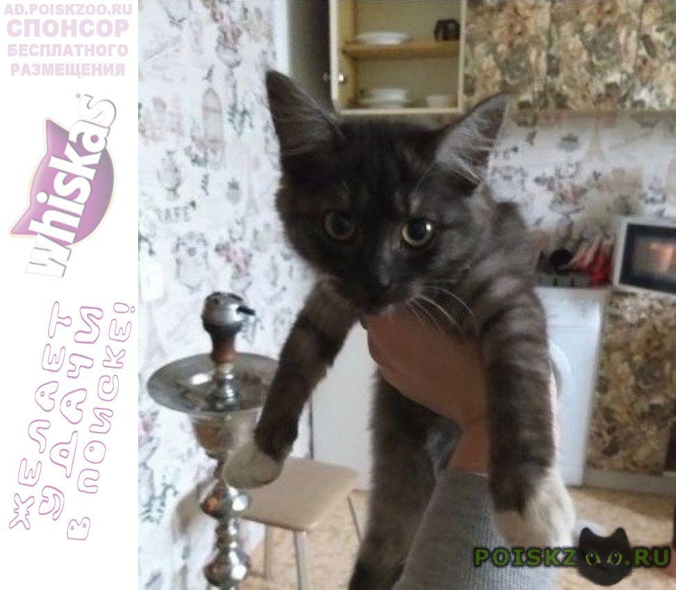 Найдена кошка котёнок г.Подольск