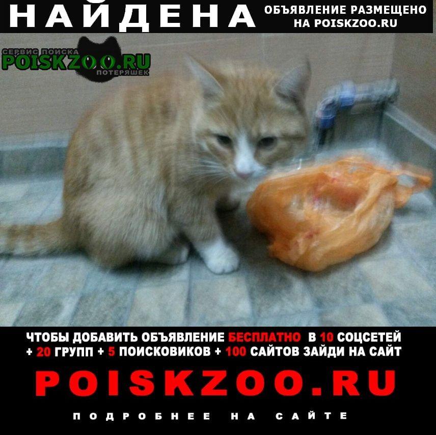 Найдена кошка найдён кот в подъезде Москва