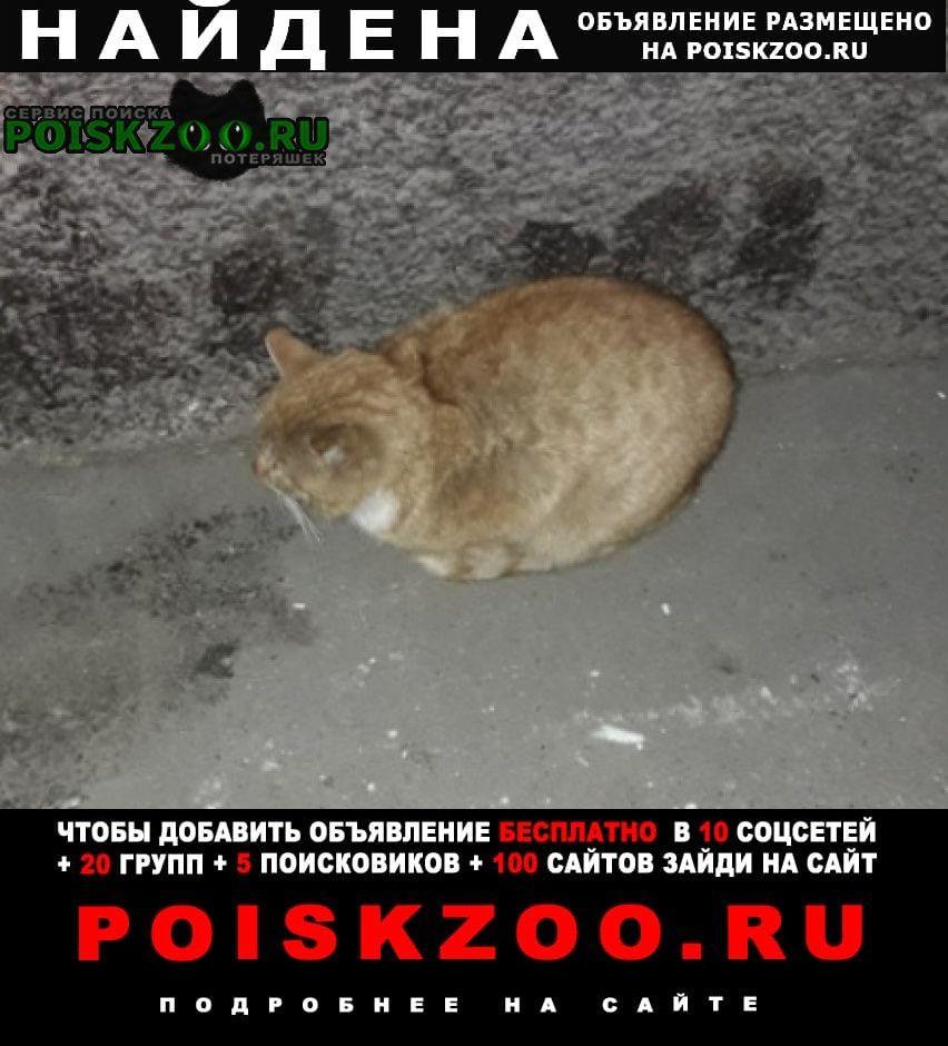 Найден кот рыжий Кемерово