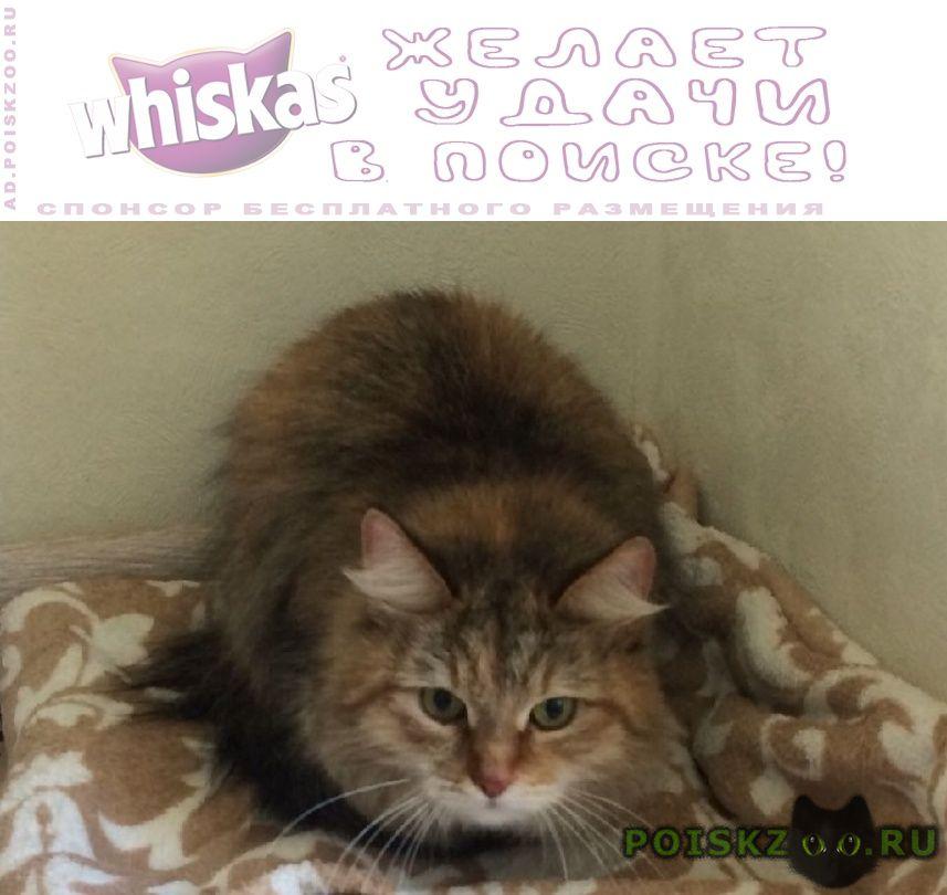 Найдена кошка митино г.Москва