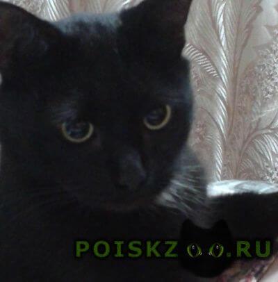 Найдена кошка черная в куркино г.Москва