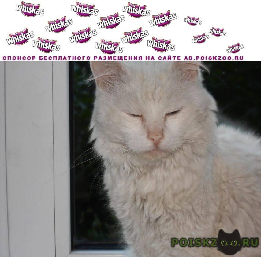 Найден котик г.Новокузнецк