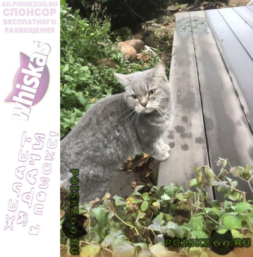 Найден кот деревня никольское г.Солнечногорск