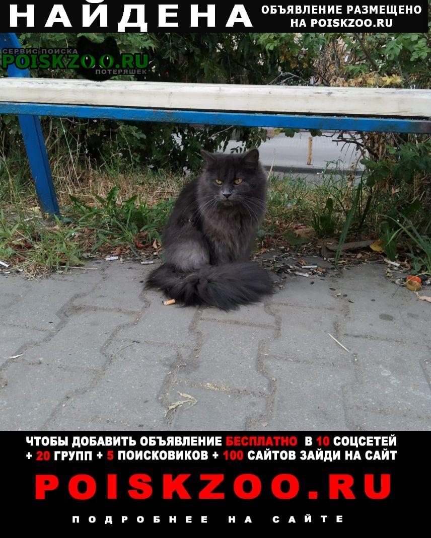 Найден кот Мытищи