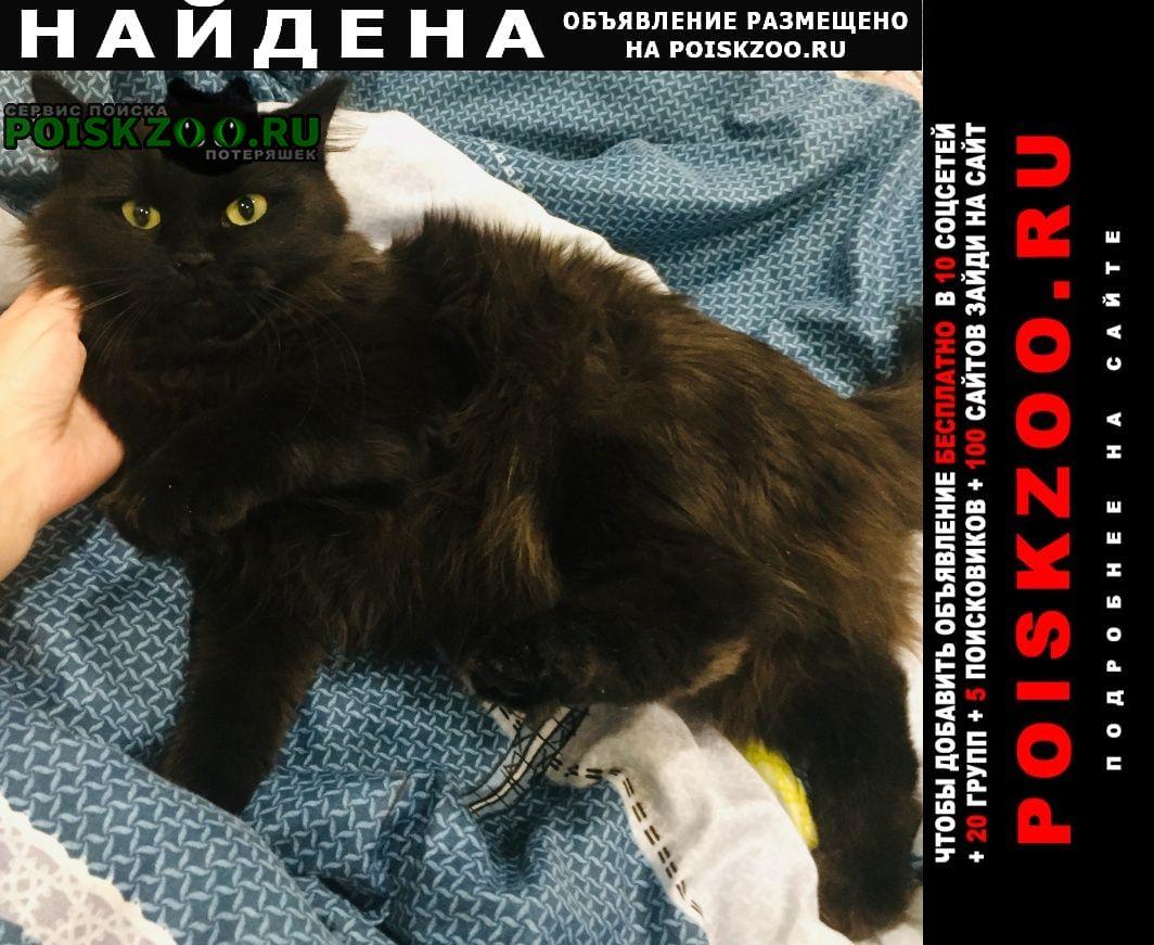 Найдена кошка чёрная, пушистая Бийск