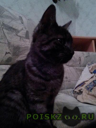 Найден кот г.Новоуральск (Свердловская обл.)
