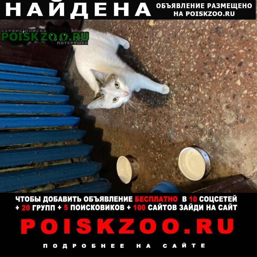 Найдена кошка молодая, очень контактная, ласковая Санкт-Петербург