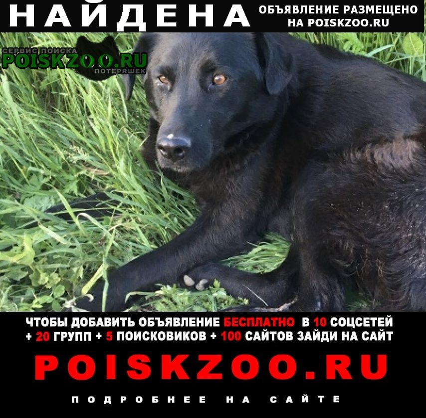 Сосновоборск (Красноярский край) Найдена собака