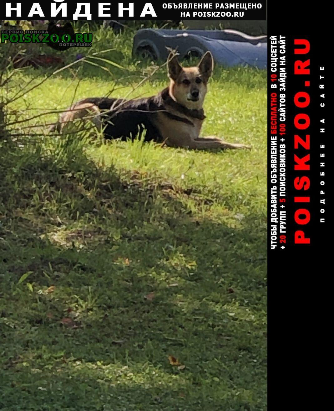 Найдена собака деревня меньково Кобринское